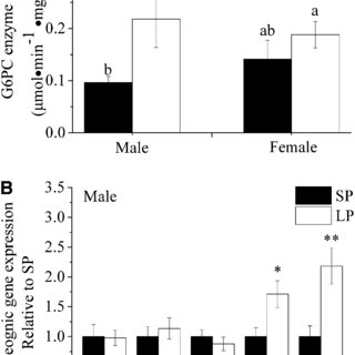 (PDF) Maternal Low-Protein Diet Induces Gender-Dependent