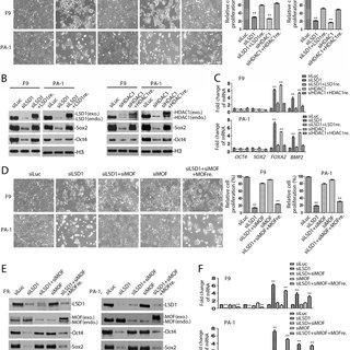 Regulation of LSD1 and HDAC1 activities by substrate