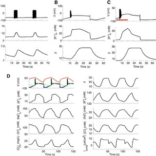 (PDF) Unification of Neuronal Spikes, Seizures, and