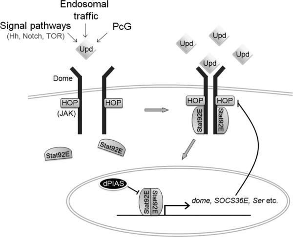 hopscotch diagram