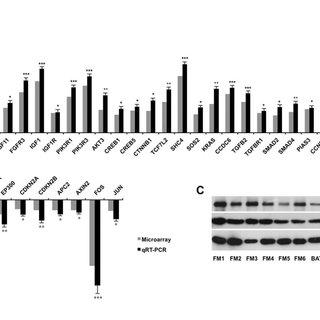 (PDF) Analysis of Gene Expression Profiling in Meningioma