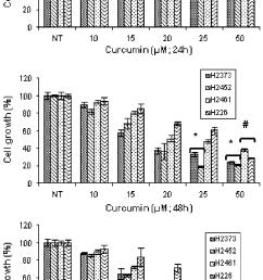 antiproliferative effect of curcumin on human mpm cells cells were download scientific diagram [ 714 x 1241 Pixel ]