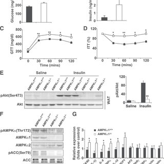 (PDF) AMP-Activated Protein Kinase α1 Protects Against