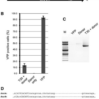 Targeting the tobacco ALS genes with TALENs. A, Schematic