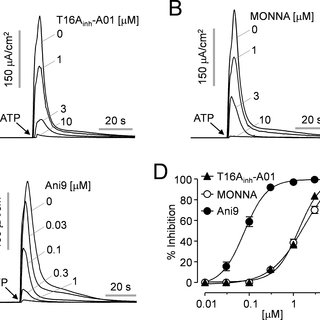 Patch-clamp analysis of ANO1 inhibition by Ani9 in FRT