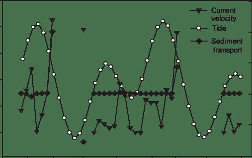 Model explaining daily tidal function in the El Mogote