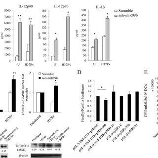 (PDF) Mycobacterium tuberculosis Controls MicroRNA-99b
