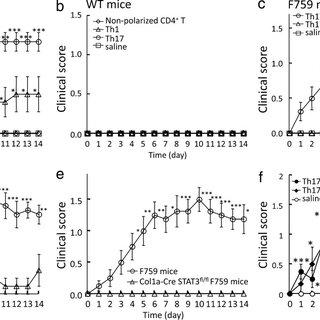 (PDF) Local microbleeding facilitates IL-6- and IL-17