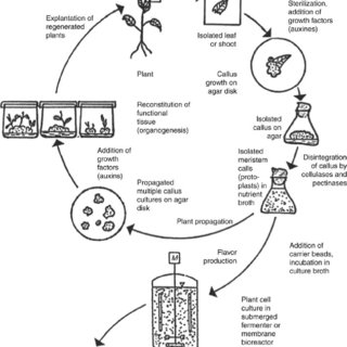 (PDF) Different Bioengineering Approaches on Production of