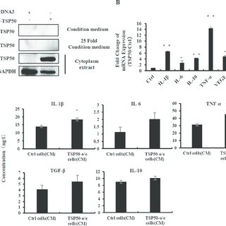 CM of TSP50-o/e cells regulates of macrophages activities