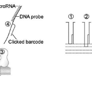 (PDF) Biomedical diagnosis perspective of epigenetic