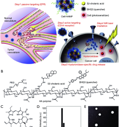 chlorin e6 loaded hyaluronic acid nanoparticles for photodynamic therapy pdt a [ 850 x 1055 Pixel ]