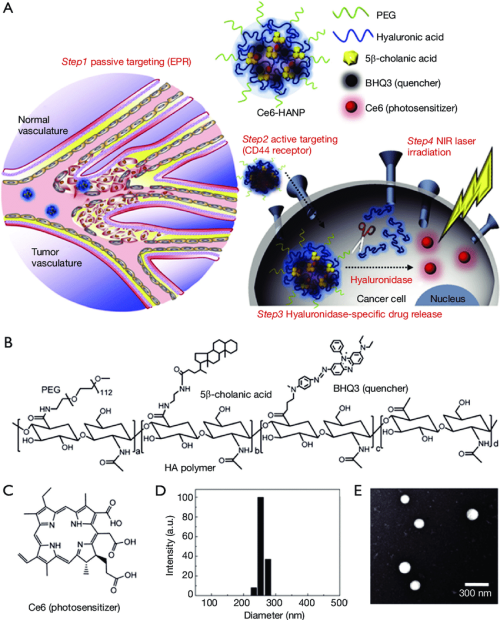 small resolution of chlorin e6 loaded hyaluronic acid nanoparticles for photodynamic therapy pdt a