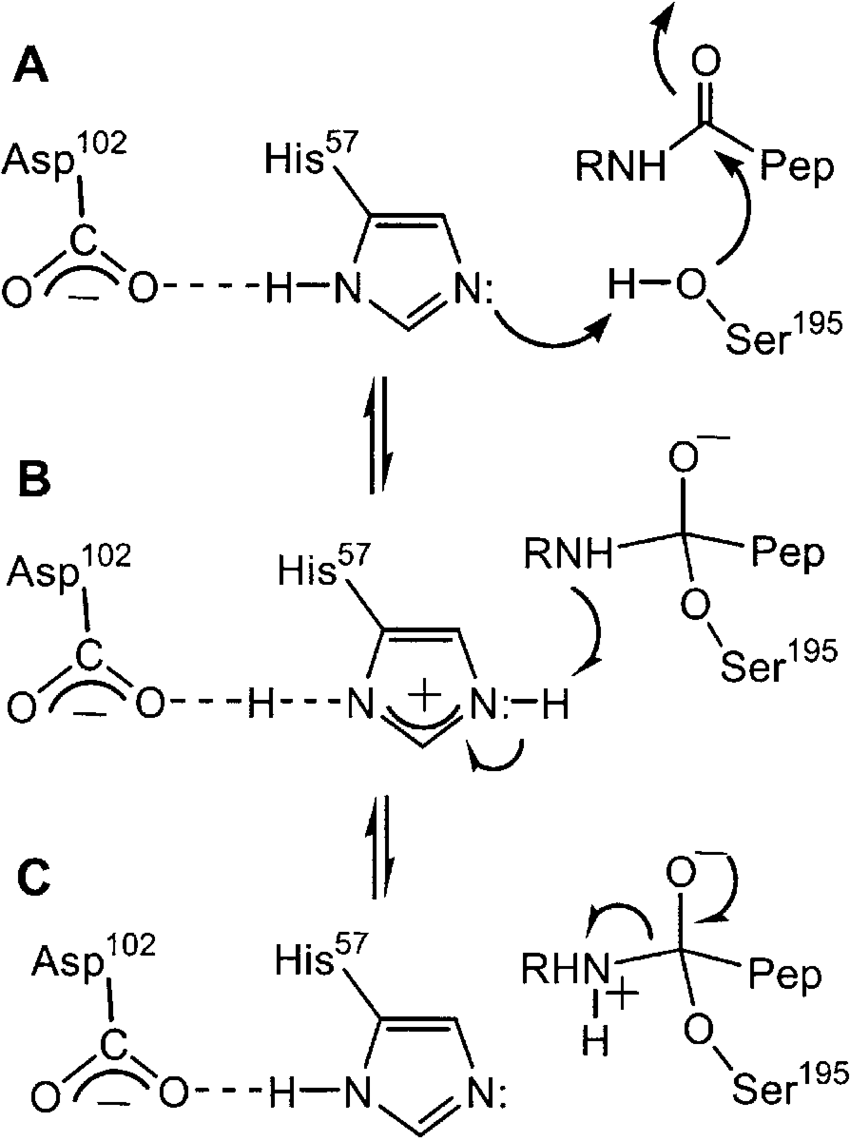 Schematic diagram for the mechanism of proton transfer in