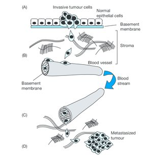 Molecular events that take place during cell invasion