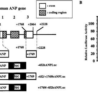 (PDF) The Neuron-Restrictive Silencer Element–Neuron