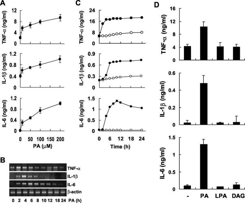 Secretion of TNF-, IL-1, and IL-6 in response to PA