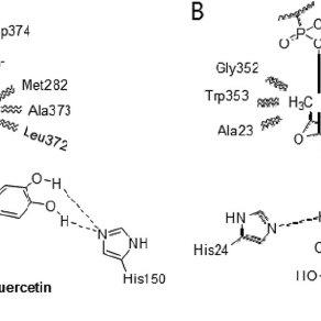 (PDF) Production of a Novel Quercetin Glycoside through