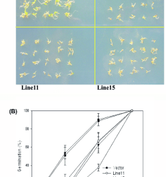 seed germination of transgenic arabidopsis plants a seed germination of 35s oswrky72 [ 850 x 1323 Pixel ]