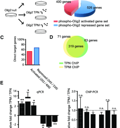 olig2 phosphorylation regulates gene expression but not dna targeting download scientific diagram [ 850 x 1075 Pixel ]