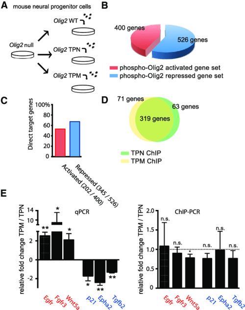 small resolution of olig2 phosphorylation regulates gene expression but not dna targeting download scientific diagram