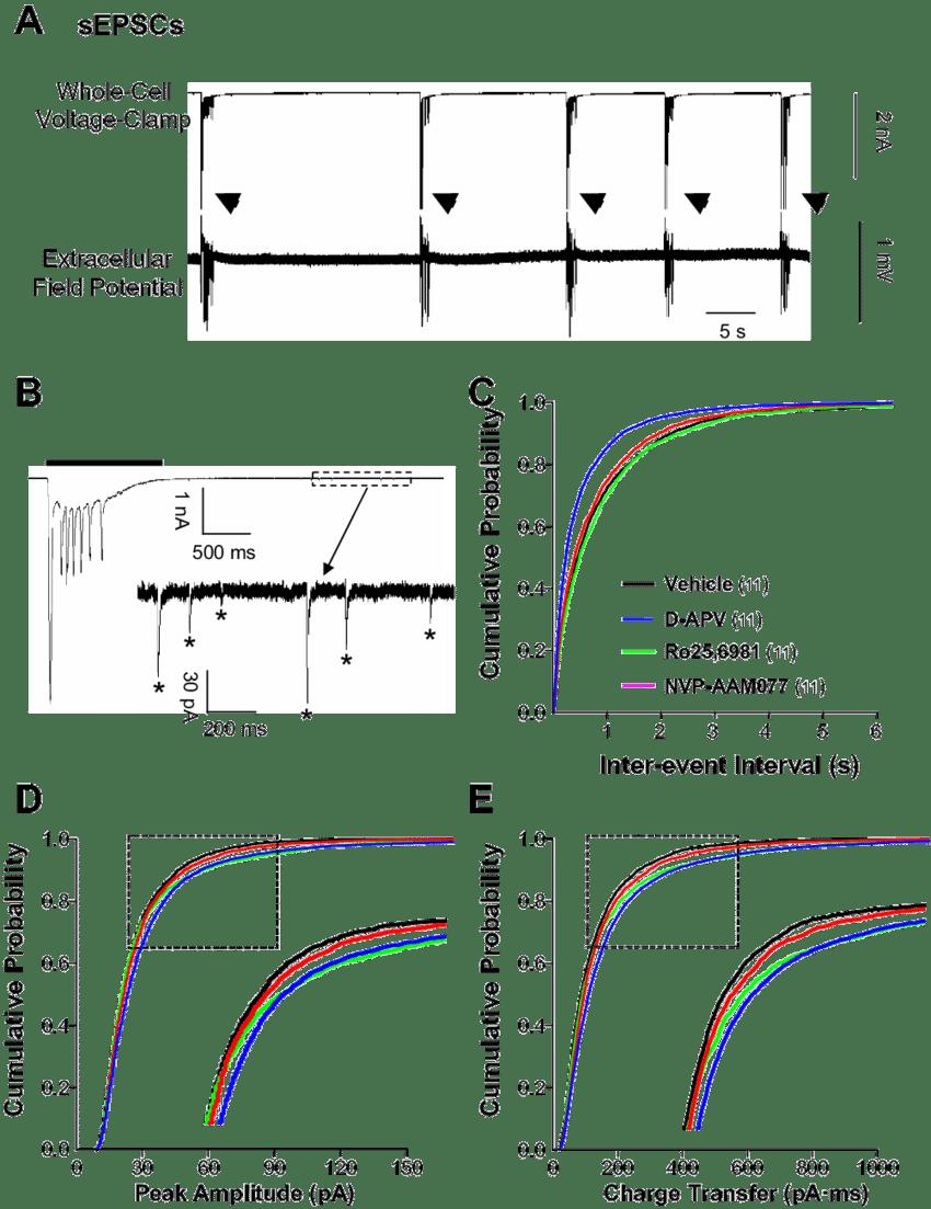 Spontaneous excitatory postsynaptic currents (sEPSCs) in