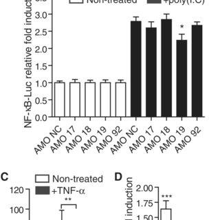 (PDF) A miR-19 regulon that controls NF- B signaling