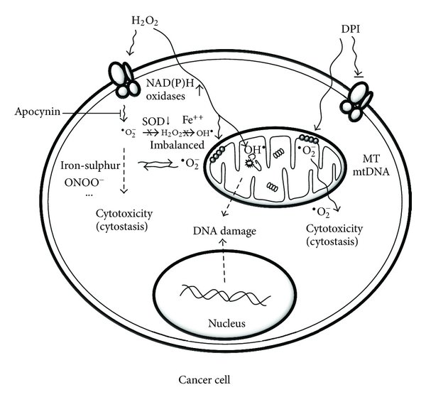 A new paradigm of oxidative injury in prostate cancer