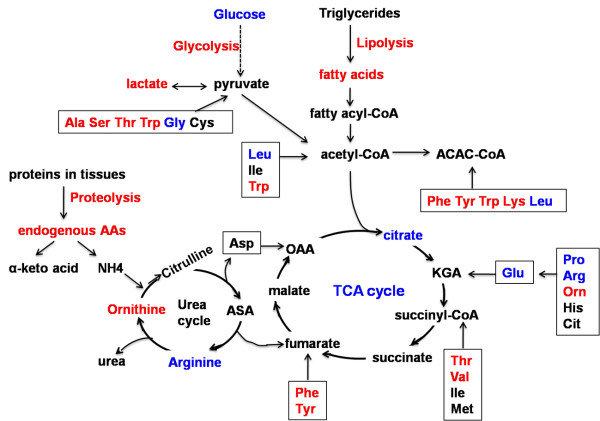 Metabolic pathways associated with polycystic ovary