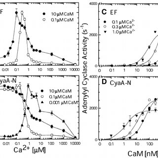 The effect of calcium ions on the interaction of EF and