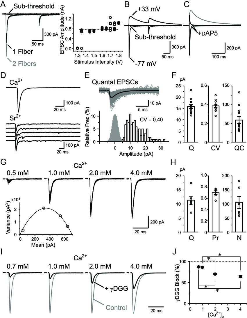 hight resolution of basic properties of rg synaptic transmission a rg rc epscs recorded with varying