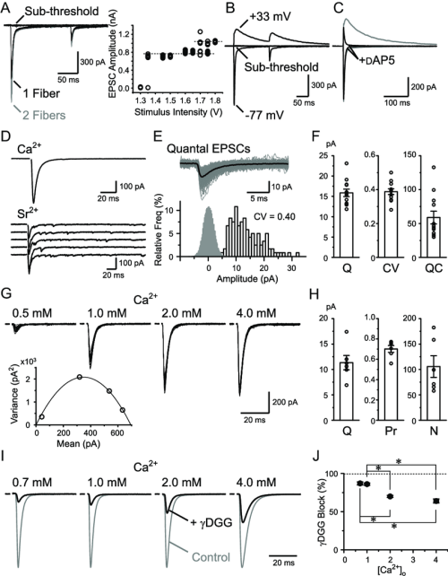 small resolution of basic properties of rg synaptic transmission a rg rc epscs recorded with varying