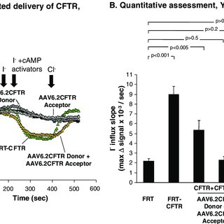 (PDF) Functional CFTR Expression in Cystic Fibrosis Airway
