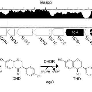 (PDF) The production of S-equol from daidzein is
