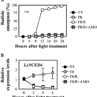 Model of the regulatory mechanism of ABA levels on the