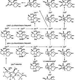 gibberellin biosynthetic pathway from ga12 aldehyde download scientific diagram [ 850 x 1027 Pixel ]