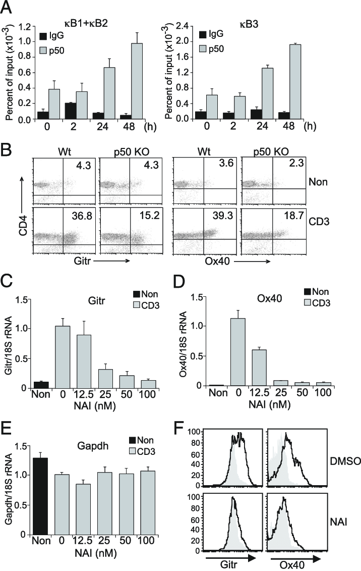 NF-kB regulates Gitr and Ox40 gene expression. (A) p50