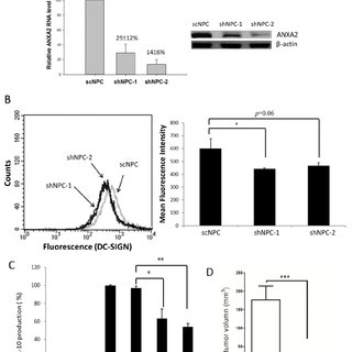 Immunoprecipitation of DC-SIGN-binding proteins on NPC