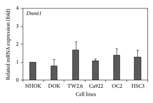 small resolution of dnmts rna expression in human oral cancer cell lines the measurement download scientific diagram