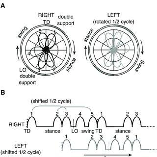 (PDF) Motor Control Programs and Walking