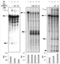 recombinant hnrnp k inhibits in vitro splicing of a d4 a7 mini intron download scientific diagram [ 850 x 1040 Pixel ]