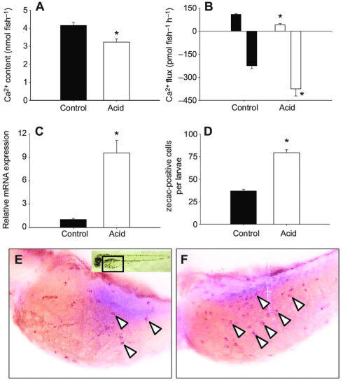 small resolution of disruption of ca 2 homeostasis in larval zebrafish exposed to acidic water a