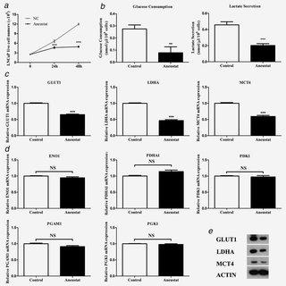 (PDF) Aneustat (OMN54) has aerobic glycolysis-inhibitory