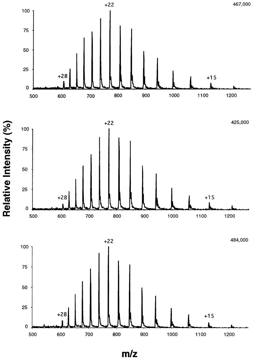 Electrospray mass spectra of 10 µ µM myoglobin in water