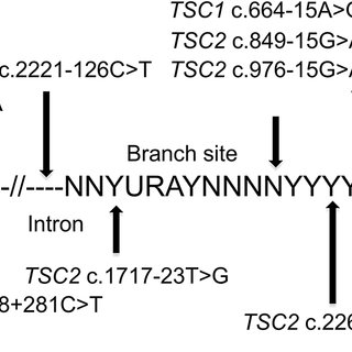 Intronic mutations in 18 TSC NMI subjects. The locations