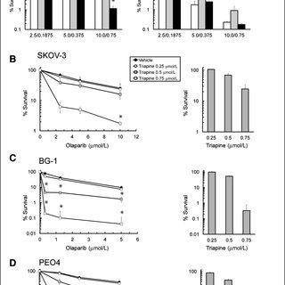 (PDF) Triapine Disrupts CtIP-Mediated Homologous