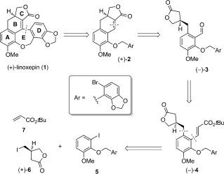 Scheme 2. Retrosynthetic analysis of (+)-linoxepin (1