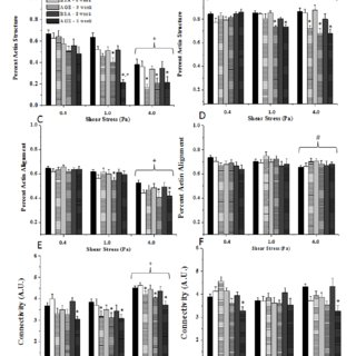 Endothelial cell (HUVEC) metabolic activity as a function