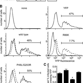 Suppression of endogenous GRB2 inhibits eMLV binding