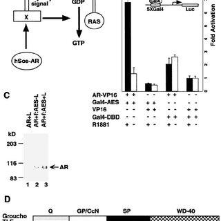(PDF) Inhibition of Androgen Receptor-Mediated